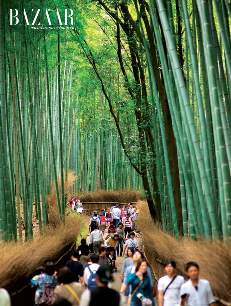 Khu rừng trúc nổi tiếng ở Kyoto thu hút nhiều du khách