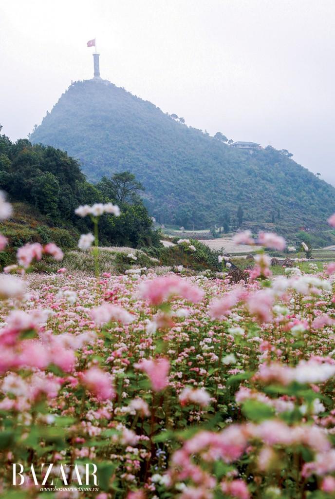 Lũng Cú, cực bắc của đất nước cũng là nơi ngắm hoa tam giác mạch tuyệt đep