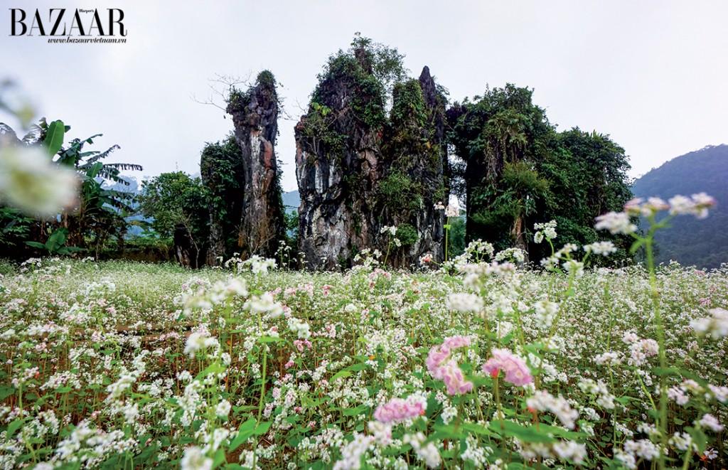 Cảnh núi non hùng vĩ, trong bạt ngàn sắc hồng của hoa tam giác mạnh nơi rừng đá biên cương tổ quốc