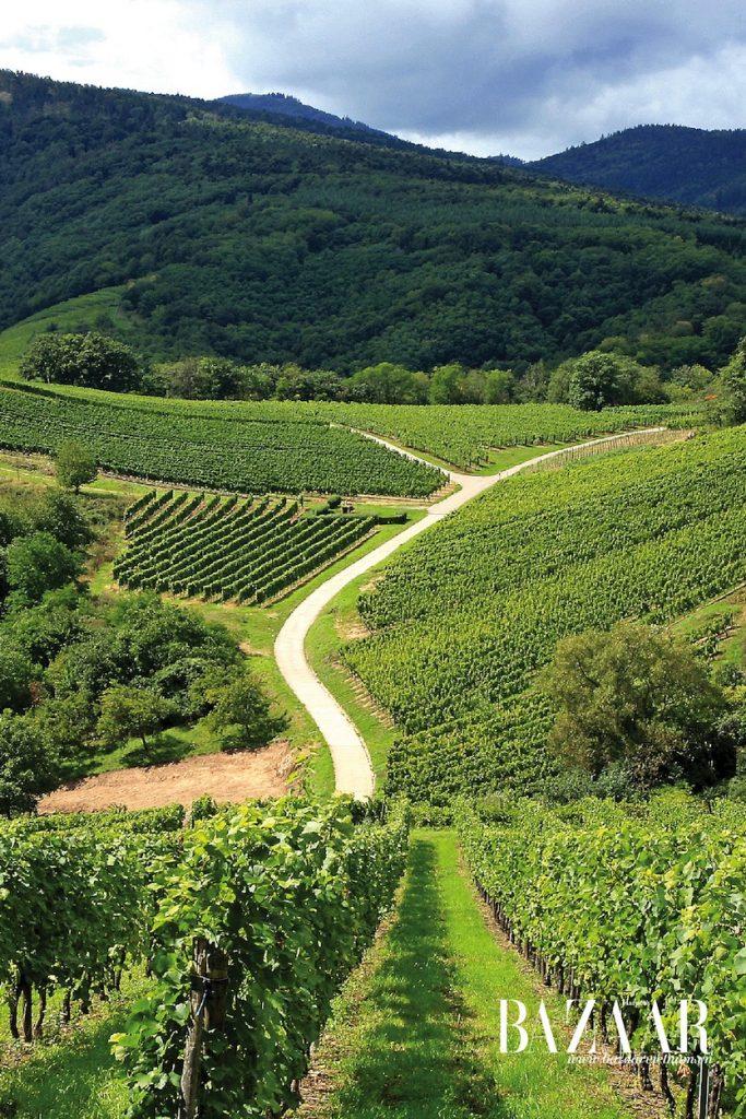 Các vườn nho ở Pháp từ lâu đã là những thánh địa của người yêu rượu vang. Tuy nhiên, danh tiếng lâu đời của những vùng nho có tiếng đã đẩy mức giá vang lên cao
