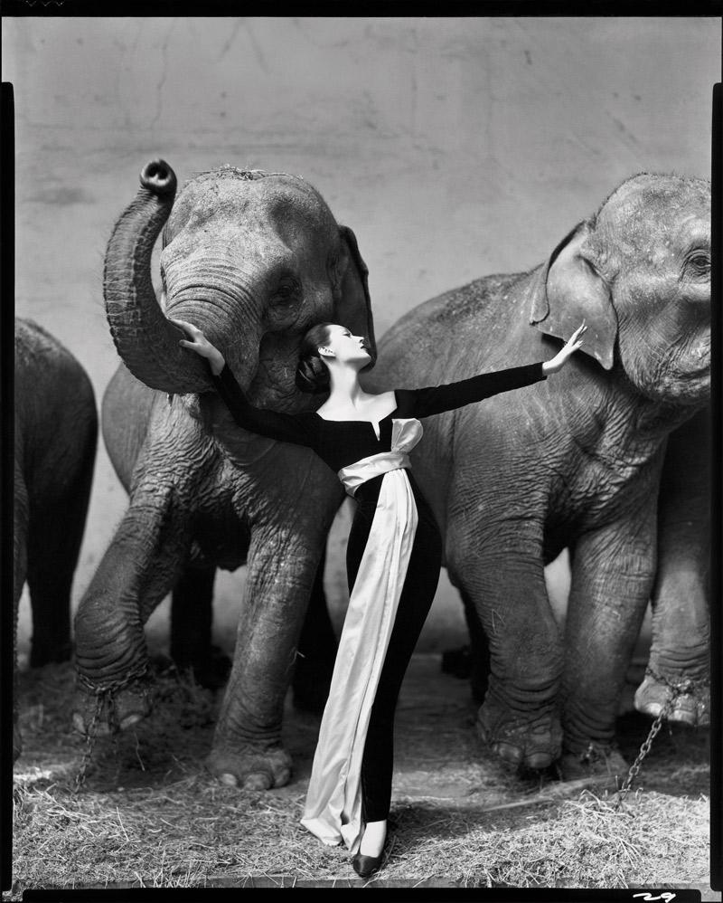 Dovima bên những chú voi. Ảnh chụp bởi Richard Avedon tại Cirque d'Hiver, Paris, tháng 8/1955. Đầm, Dior