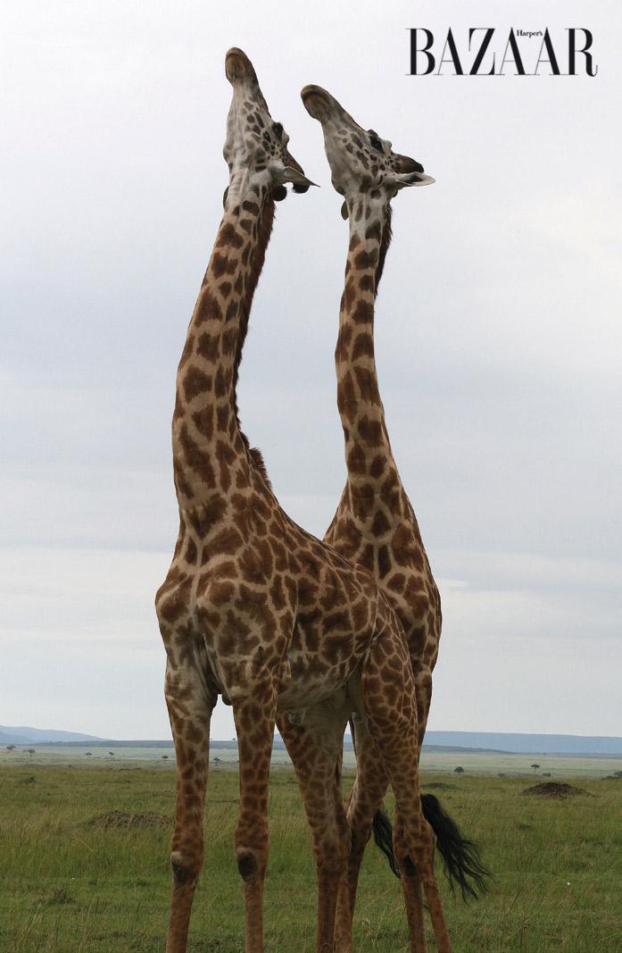 masai-mara-4