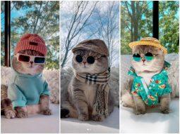 Diện đồ như fashionista, chú mèo trở nên nổi tiếng với 100 ngàn lượt theo dõi trên Instagram