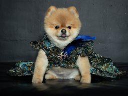 Anthony Rubio ra mắt BST thời trang cho cún cưng tại tuần lễ thời trang New York