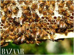 Làm quen với keo ong, thành phần điều trị sẹo mụn từ thiên nhiên