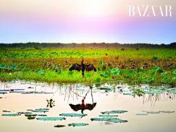 Tràm Chim Tam Nông: Ngôi nhà của 1/4 loài chim quý hiếm có mặt tại Việt Nam