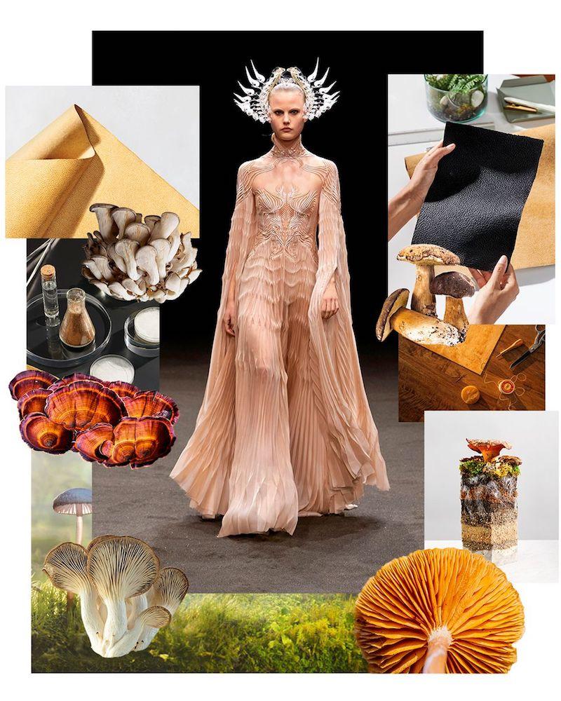 Tương lai của thời trang là nấm: Nguồn chất liệu cho thời trang bền vững