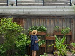 Không cần đi chợ, Hà Tăng vẫn nấu được cả bát canh ngon nhờ vườn rau nhà trồng