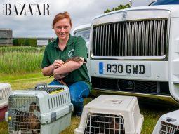 Rolls-Royce giải cứu đàn vịt con mồ côi mẹ với siêu xe